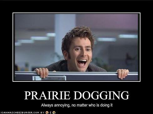 prairiedogging