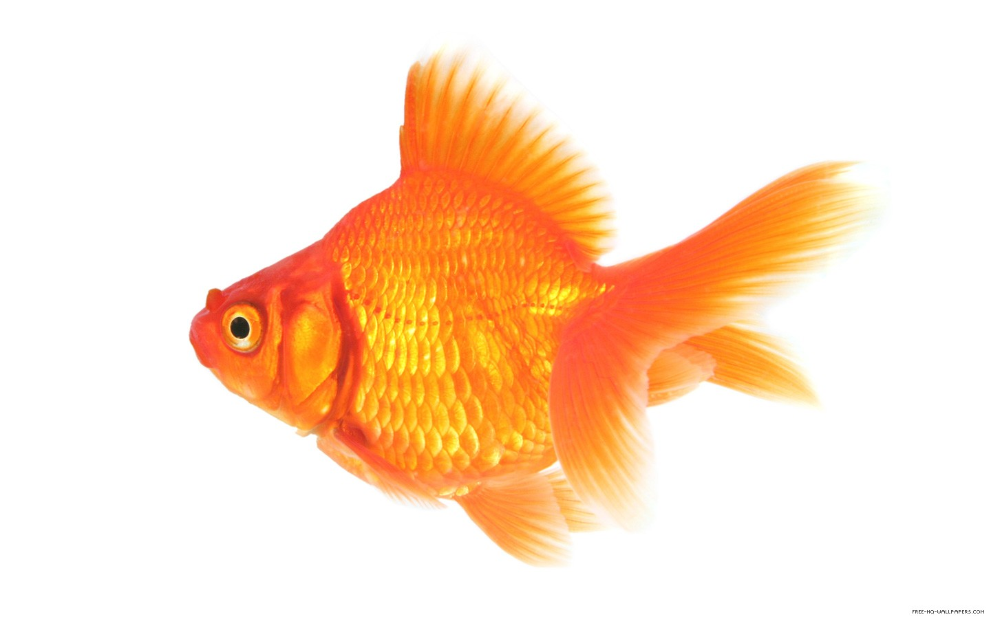 Random rankings top 11 things that are orange seven for Best white fish to eat
